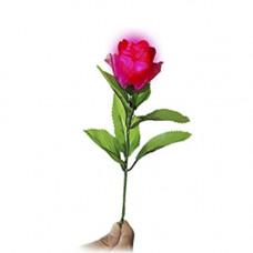 D'lite Rose