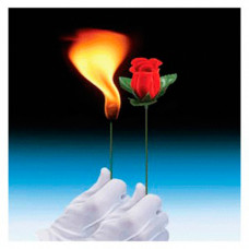 Torch to Rose,