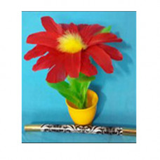 Giti Flower