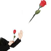 Three Roses,Fire Rose